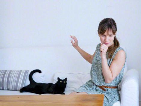 Алергія на кота