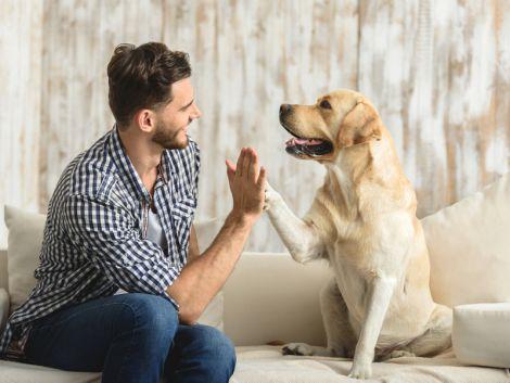 Уход за собакой: несколько советов от специалистов