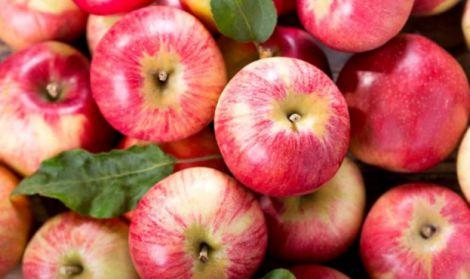 Користь яблук для поліпшення пам'яті