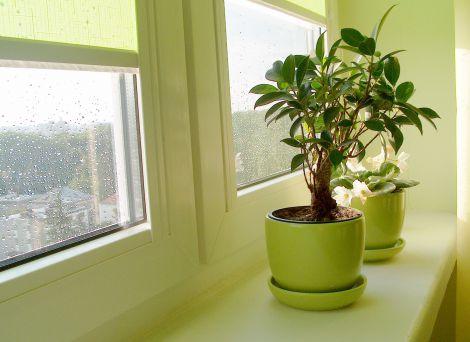 Рослини рятують від стресу