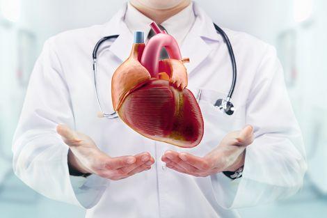 Орган-трудоголік: кілька цікавих фактів про серце