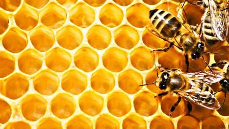 Мед лікує виразки