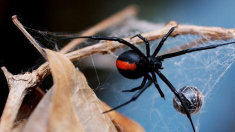 Боязнь павуків можна вилікувати за кілька хвилин