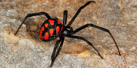 Небезпечний укус павука