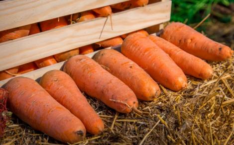 Морква з нітратами