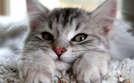 Власники котів живуть довше