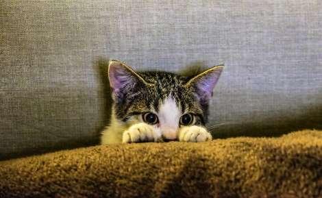 Це перший випадок, коли пташиний грип був перенесений до людини котом