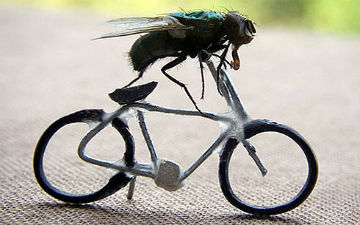 Як вигнати надокучливих мух