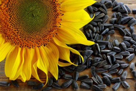 Кому не можна їсти насіння соняшника?
