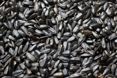 Апендицит та насіння