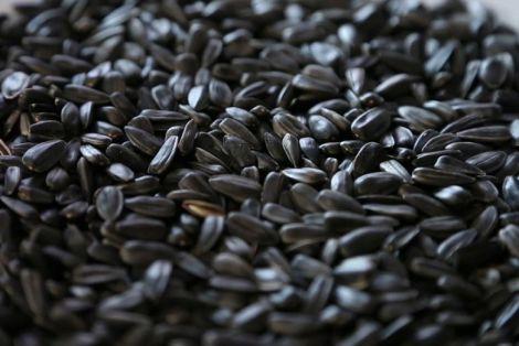 Шкода насіння соняшника
