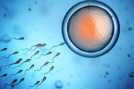 Мобільний додаток для підрахунку сперматозоїдів