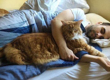 Туляремію поширюють кішки