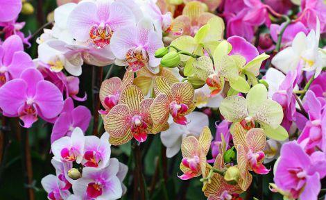 Кімнаті рослини можуть призвести до головного болю