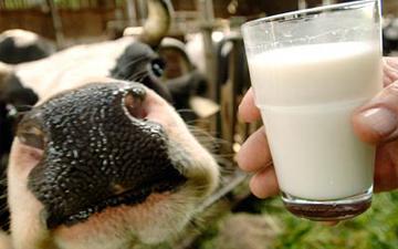молоко врятує від ВІЛу