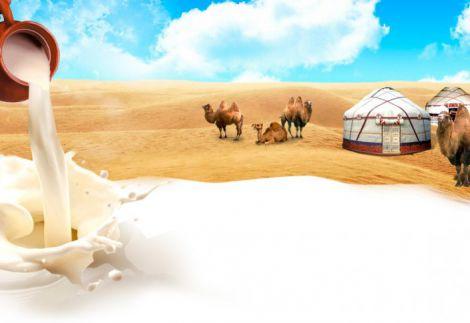 Молоко верблюда врятує від запалень