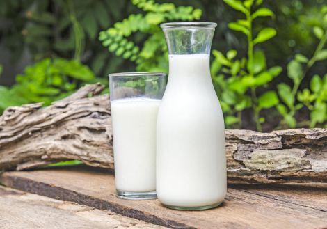 Користь та шкода вживання молока