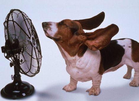 Рятуємось від спеки разом
