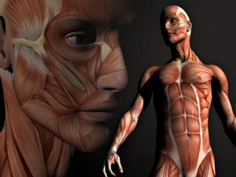 Людське тіло