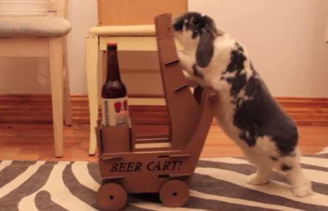 Треба так свого собаку навчити:)