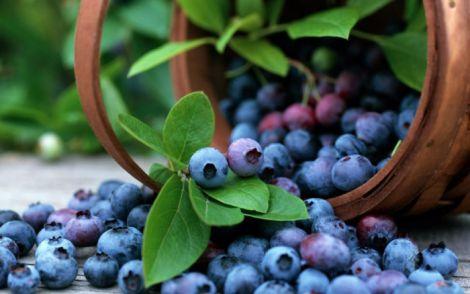Експерти назвали ягоду, що сповільнює старіння