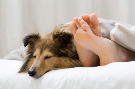 Сон з домашнім улюбленцем