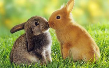 поцілунок здатен позбавити від зморшок