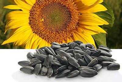 Чим корисне насіння?