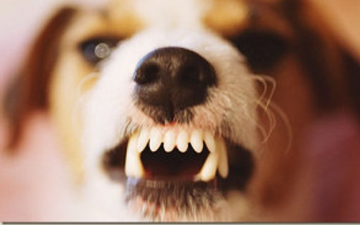 страхи перед тваринами надзвичайно поширені
