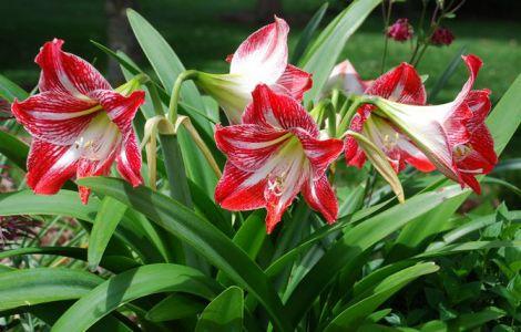 Кімнатні рослини для зміцнення здоров'я