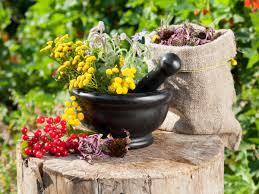 Які цілющі трави потрібно збирати у травні?