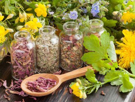 Лікарські трави для зниження рівня холестерину