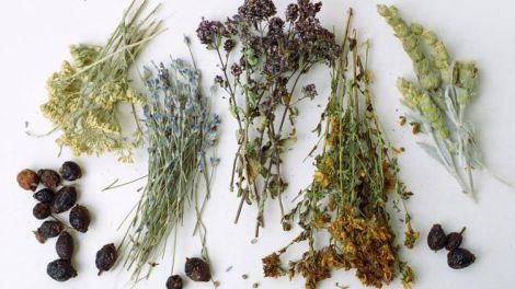 Трави для очистки нирок