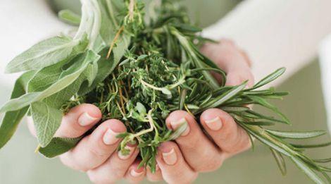 Трави від гіпертонії