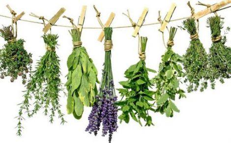 Як трави шкодять здоров'ю?
