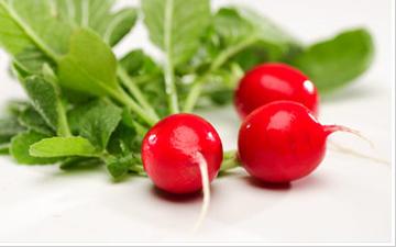 ранні овочі з більшою ймовірністю містять значну кількість нітратів