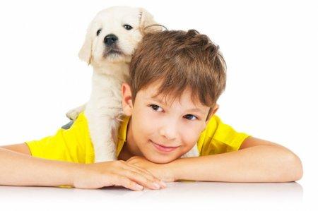 Собака в будинку: як доглядати?