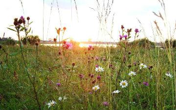 Трави, які можуть вилікувати алкоголізм