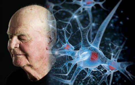 Як затримати старіння мозку?