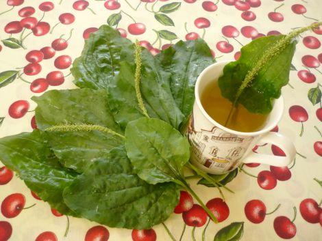 Чай з подорожника від холестерину