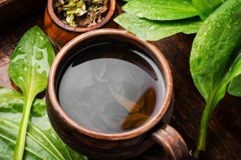 Подорожниковий чай від холестерину