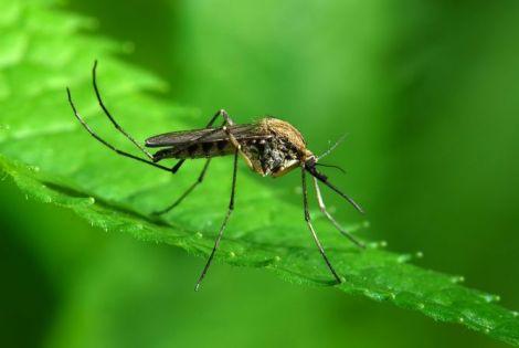 Унікальний спосіб боротьби з комарами