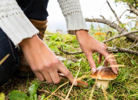 Як уникнути отруєння грибами?