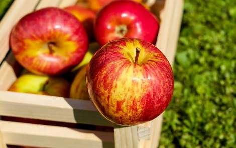 Яблука запобігають раку