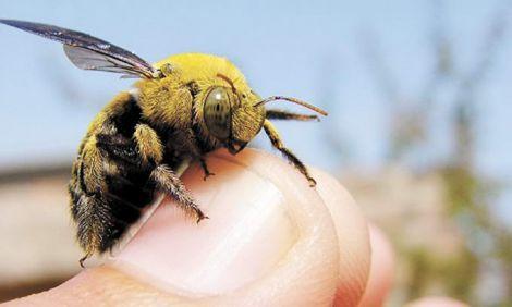 Бджолина отрута вилікує екзему