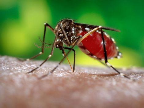 Малярія у дітей