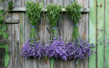6 найкорисніших трав
