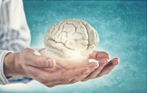 Мозок після смерті