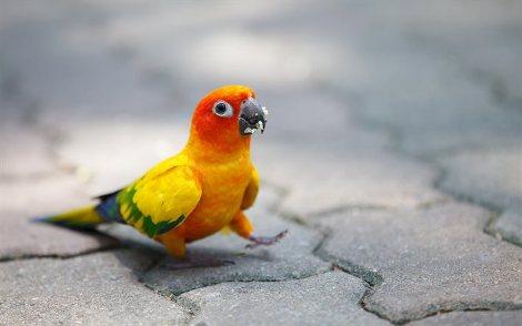 Ось які мають бути папужки:)