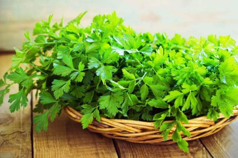 parsley-featured.jpg (38.25 Kb)